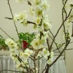 春を告げる・・・♪